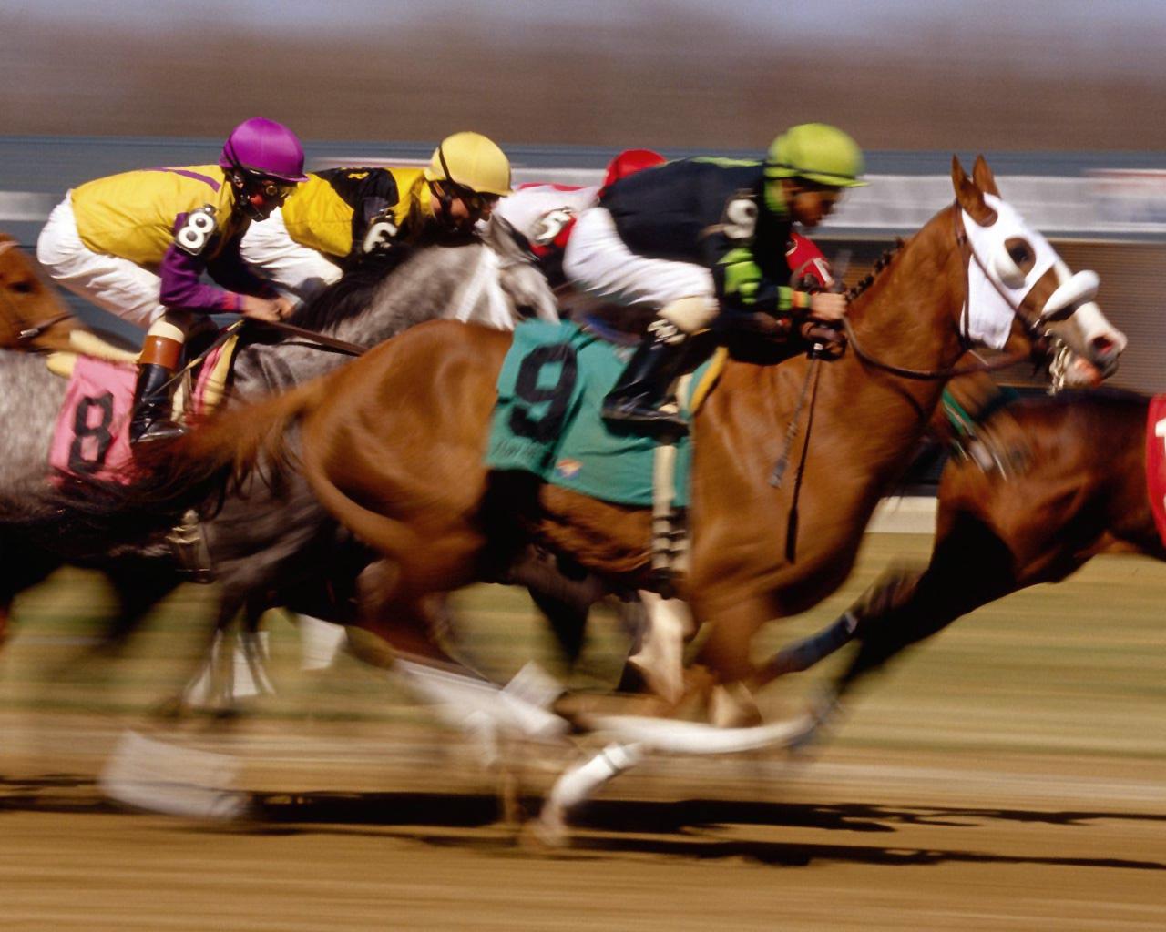 caballos-de-carrera